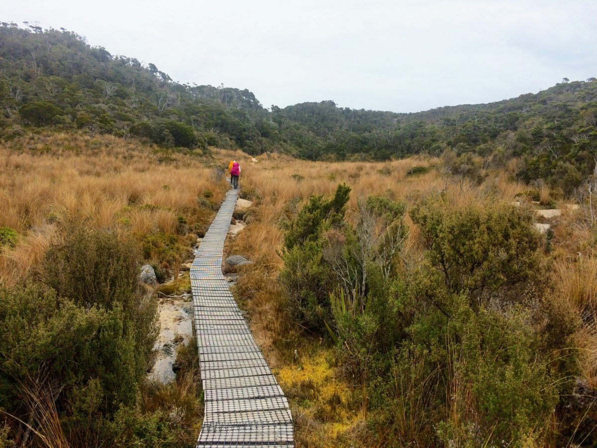 You are currently viewing The Heaphy Track
