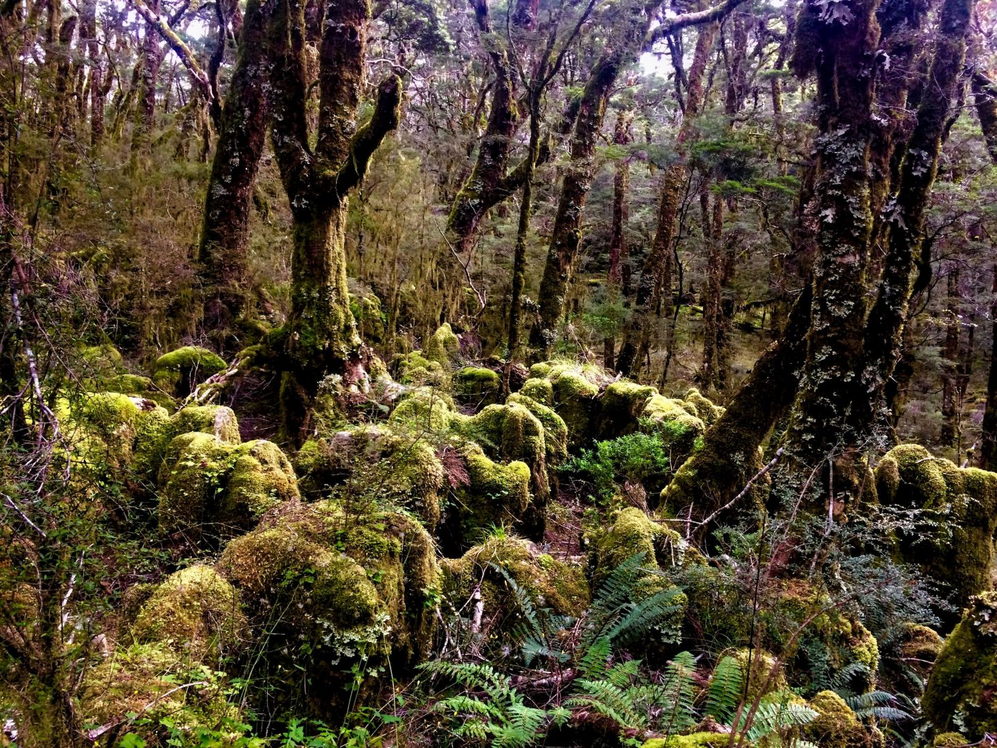 Heaphy Track enchanted Forest