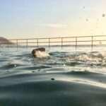 Summer Ocean Pool Challenge – Illawarra