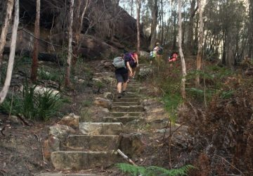 Stair training in the Sydney bush